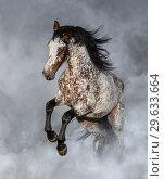 Купить «Лошадь породы Аппалуза в дыму», фото № 29633664, снято 20 января 2015 г. (c) Абрамова Ксения / Фотобанк Лори