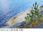 Купить «Karelian landscape - rocks, pine trees and water. Bay Chupa, White Sea, Karelia, Russia», фото № 29638140, снято 10 августа 2018 г. (c) Сергей Трофименко / Фотобанк Лори