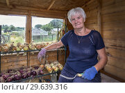 Купить «Marion McMahon, Plot 24, Eglinton Growers Allotments, Kilwinning, Ayrshire, Scotland, UK.», фото № 29639316, снято 21 июля 2018 г. (c) age Fotostock / Фотобанк Лори