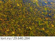 Купить «Transparent river bottom of stones.», фото № 29640284, снято 5 сентября 2018 г. (c) Акиньшин Владимир / Фотобанк Лори