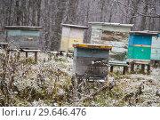 Купить «Ульи на зимнем хранении», фото № 29646476, снято 9 ноября 2018 г. (c) Яковлев Сергей / Фотобанк Лори
