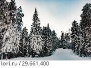 Купить «Хвойный  еловый лес в зимний период на фоне неба», фото № 29661400, снято 9 января 2019 г. (c) Сергеев Валерий / Фотобанк Лори
