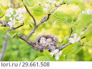 Купить «eggs in nest outdoor», фото № 29661508, снято 7 мая 2018 г. (c) Майя Крученкова / Фотобанк Лори