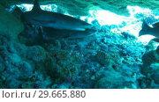 Купить «A Shark Underwater», видеоролик № 29665880, снято 20 апреля 2019 г. (c) Wavebreak Media / Фотобанк Лори