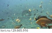 Купить «Underwater Stock Footage», видеоролик № 29665916, снято 22 апреля 2019 г. (c) Wavebreak Media / Фотобанк Лори