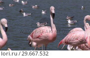 Купить «Beautiful Flamingos», видеоролик № 29667532, снято 12 июля 2020 г. (c) Wavebreak Media / Фотобанк Лори