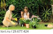 Купить «Mother and daughter potting flowers on lawn», видеоролик № 29677424, снято 6 ноября 2010 г. (c) Wavebreak Media / Фотобанк Лори
