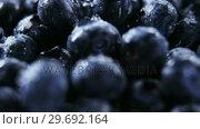 Купить «Close-up of fresh blueberries with water drops», видеоролик № 29692164, снято 12 августа 2016 г. (c) Wavebreak Media / Фотобанк Лори