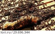 Купить «Close-up of honey bee frame covered with bees», видеоролик № 29696344, снято 27 октября 2016 г. (c) Wavebreak Media / Фотобанк Лори