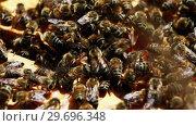 Купить «Close-up of honey bee frame covered with bees», видеоролик № 29696348, снято 27 октября 2016 г. (c) Wavebreak Media / Фотобанк Лори