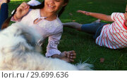 Купить «Siblings sitting with their pet dog in park», видеоролик № 29699636, снято 10 ноября 2016 г. (c) Wavebreak Media / Фотобанк Лори