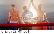 Купить «Boxer holding winner hand after announcing victory», видеоролик № 29701204, снято 22 января 2017 г. (c) Wavebreak Media / Фотобанк Лори