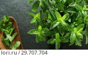 Купить «Basil herb on black background 4k», видеоролик № 29707704, снято 5 июня 2017 г. (c) Wavebreak Media / Фотобанк Лори