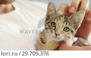 Купить «Young man stroking his tabby cat at home 4K 4k», видеоролик № 29709376, снято 31 мая 2017 г. (c) Wavebreak Media / Фотобанк Лори