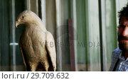 Купить «Craftsman preparing bird sculpture 4k», видеоролик № 29709632, снято 30 мая 2017 г. (c) Wavebreak Media / Фотобанк Лори
