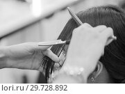 The hairdresser does a haircut of hair to a woman, a brunette in a beauty salon. Стоковое фото, фотограф Женя Канашкин / Фотобанк Лори