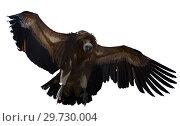 Купить «Griffon vulture in flight», фото № 29730004, снято 23 января 2019 г. (c) Яков Филимонов / Фотобанк Лори