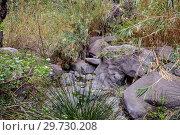 Купить «Hiking in Gorge Masca. Volcanic island. Mountains of the island of Tenerife, Canary Island, Spain.», фото № 29730208, снято 27 декабря 2017 г. (c) Konstantin Shabalin / Фотобанк Лори