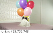 Купить «Papillon dog runs with multicolored balloons in his teeth stock footage video», видеоролик № 29733748, снято 16 января 2019 г. (c) Юлия Машкова / Фотобанк Лори