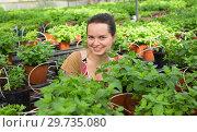Купить «Young female worker arranging peppermint while gardening», фото № 29735080, снято 20 января 2020 г. (c) Яков Филимонов / Фотобанк Лори