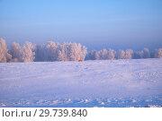 Купить «Red fox runs on a snow-covered field.», фото № 29739840, снято 4 января 2019 г. (c) Serg Zastavkin / Фотобанк Лори