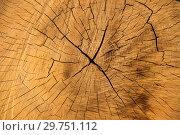 Купить «Текстура ствола дерева», фото № 29751112, снято 17 октября 2018 г. (c) Литвяк Игорь / Фотобанк Лори