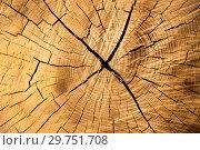 Купить «Текстура ствола дерева», фото № 29751708, снято 17 октября 2018 г. (c) Литвяк Игорь / Фотобанк Лори