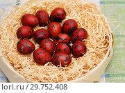 Купить «Перепелиные яйца, окрашенные отваром луковой шелухи», эксклюзивное фото № 29752408, снято 8 апреля 2018 г. (c) Dmitry29 / Фотобанк Лори