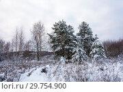 Купить «Winter landscape with snow-covered trees on a frosty December day», фото № 29754900, снято 29 декабря 2018 г. (c) Валерий Смирнов / Фотобанк Лори