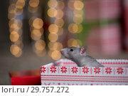 Купить «Gray rat with gifts on the background of the Christmas tree», фото № 29757272, снято 19 января 2019 г. (c) Типляшина Евгения / Фотобанк Лори