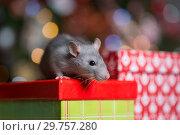 Купить «Gray rat with gifts on the background of the Christmas tree», фото № 29757280, снято 19 января 2019 г. (c) Типляшина Евгения / Фотобанк Лори