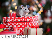 Купить «Gray rat with gifts on the background of the Christmas tree», фото № 29757284, снято 19 января 2019 г. (c) Типляшина Евгения / Фотобанк Лори