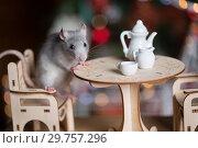 Купить «Gray rat symbol of the new year», фото № 29757296, снято 19 января 2019 г. (c) Типляшина Евгения / Фотобанк Лори