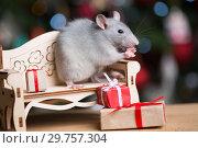 Купить «Gray rat symbol of the new year», фото № 29757304, снято 19 января 2019 г. (c) Типляшина Евгения / Фотобанк Лори