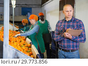 Купить «Serious owner of fruit warehouse checking work of female employees engaged in tangerines sorting», фото № 29773856, снято 15 декабря 2018 г. (c) Яков Филимонов / Фотобанк Лори