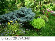 Купить «Dwarf spruce in landscape design in the garden», фото № 29774348, снято 21 июля 2018 г. (c) Володина Ольга / Фотобанк Лори