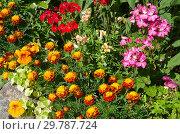 Купить «Красивая клумба в летнем саду», фото № 29787724, снято 10 августа 2018 г. (c) Елена Коромыслова / Фотобанк Лори