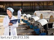 Купить «attentive mature woman is standing at the cow farm», фото № 29813336, снято 24 октября 2017 г. (c) Яков Филимонов / Фотобанк Лори