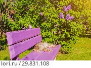 Купить «Spring landscape - spring lilac flowers blooming in the garden», фото № 29831108, снято 15 июня 2017 г. (c) Зезелина Марина / Фотобанк Лори