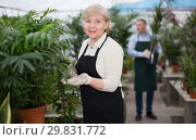 Купить «Portrait of female gardener with blooming flower who is taking care of them», фото № 29831772, снято 23 февраля 2018 г. (c) Яков Филимонов / Фотобанк Лори