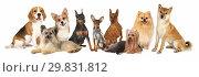Купить «Group of Various Size Dogs», фото № 29831812, снято 3 ноября 2018 г. (c) Алексей Кузнецов / Фотобанк Лори
