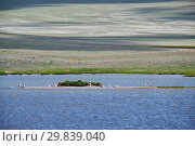 Small Mongolian lake. A flock of gulls sits near the water on the island. Mongolia (2017 год). Стоковое фото, фотограф Serg Zastavkin / Фотобанк Лори