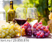 Купить «still life with glasses of red and white wine and grapes in field of vineyard», фото № 29850816, снято 16 февраля 2019 г. (c) Татьяна Яцевич / Фотобанк Лори