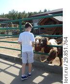 Мальчик кормит пони. Стоковое фото, фотограф Елизарова Ирина / Фотобанк Лори