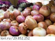 Купить «Different onion varieties», фото № 29852252, снято 22 октября 2017 г. (c) Яков Филимонов / Фотобанк Лори