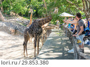 Khao Kheow Open Zoo in Pattaya (2017 год). Редакционное фото, фотограф Юлия Белоусова / Фотобанк Лори