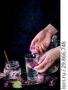 Купить «Femail hands put ice cubes with flowers into glass of lilac lemonade with lemon. Glass jar of sugared lilac flowers and pitcher on black tablecloth over black. Dark rustic atmosphere. See series.», фото № 29866748, снято 29 марта 2020 г. (c) age Fotostock / Фотобанк Лори