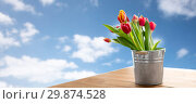red tulip flowers in tin bucket on table. Стоковое фото, фотограф Syda Productions / Фотобанк Лори