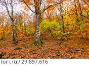 Купить «mountain slope, view of the autumn deciduous forest», фото № 29897616, снято 9 ноября 2017 г. (c) Константин Лабунский / Фотобанк Лори