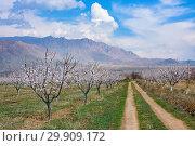 Купить «Apricot farm during sping season against Vayk mountain range, Vayots Dzor Province, Armenia», фото № 29909172, снято 16 марта 2018 г. (c) Papoyan Irina / Фотобанк Лори